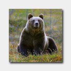 3-D-Magnet Björn