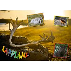 Postkarte 12 Sommer Rentierhorn