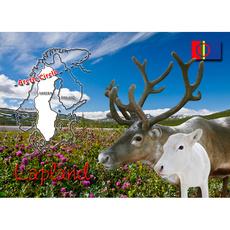 Postkarte 13 Polarkreis Rentiere